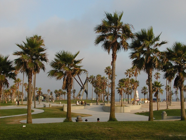 California Palm Pictures